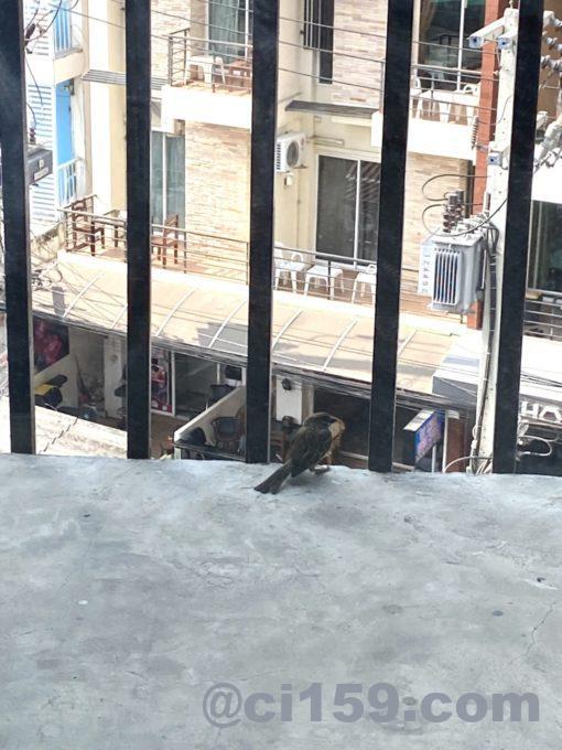 247 Boutique Hotelから外の眺め