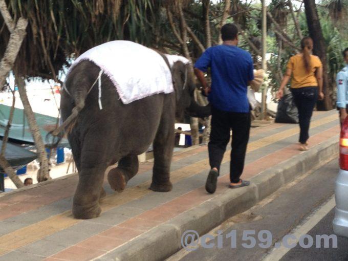 歩道を歩く小象