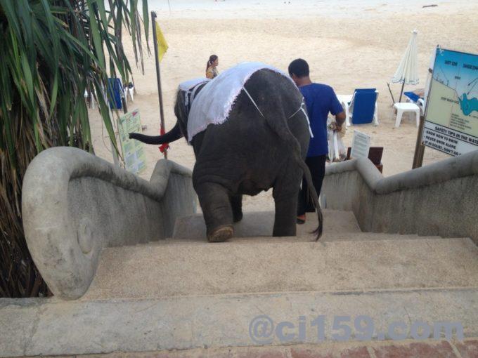 カタビーチと小象