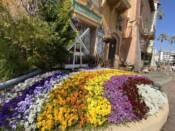 ポルトヨーロッパに咲く花