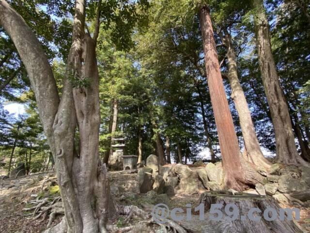 玄宮園の木々